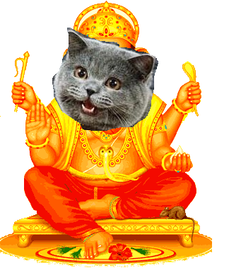 happy cat god